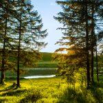 Der Wald im Feriendorf